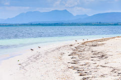 Birds on the beach in Cayo Levisa Island in Cuba Stock Images