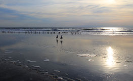 Birds on beach at dawn Stock Photos
