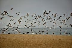 Birds in the Beach Stock Photo