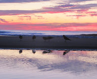 Birds on the beach. In the morning, sunrise time Royalty Free Stock Image