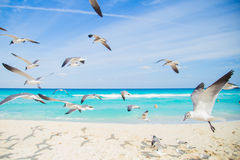 Birds on the beach. Soaring seagull over the ocean Stock Photography