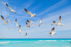 Birds on the beach. Soaring seagull over the ocean Stock Images