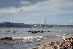 Birds on beach of Tagus river Stock Photography