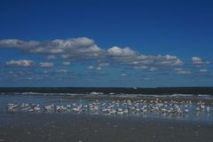 Birds on the beach while waves roll in under a blue sky