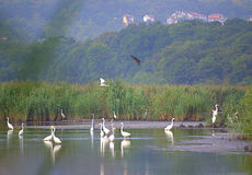 Birds in beautiful lake scenery Stock Images