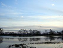 Birds, trees and flood field in spring, Lithuania Stock Image