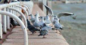 Birds Begging For Food