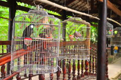 Birds are being kept in the cage for tourist viewing in a resort in Vietnam Royalty Free Stock Photography