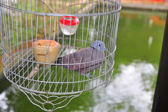 Birds are being kept in the cage for tourist viewing in a resort in Vietnam Royalty Free Stock Images
