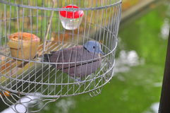 Birds are being kept in the cage for tourist viewing in a resort in Vietnam Stock Image