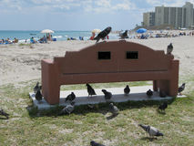 BIRDS ON A BENCH, AT THE BEACH, IN JUPITER,FLORIDA. DIFFERENT TYPES OF BIRDS ON & AROUND A CONCRETE BENCH AT JUPITER BEACH ON A SUNNY, BLUE SKY DAY IN THE TOWN Stock Images