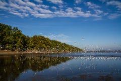 Birds bevy flying up Rozmberk pond,Czech Republic Royalty Free Stock Image