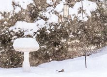 Birds on bird feeder in blowing snow storm, birdbath full of snow. Nature, birds and weather concepts royalty free stock photos