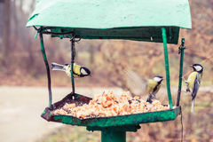 Birds on the bird feeder Royalty Free Stock Photography