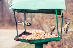 Birds on the bird feeder. Great Tit on the bird feeder (Parus major Royalty Free Stock Photography