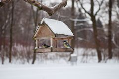 Birds in the bird feeder in the winter snow forest royalty free stock photography
