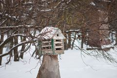 Birds in the bird feeder in the winter snow forest stock images