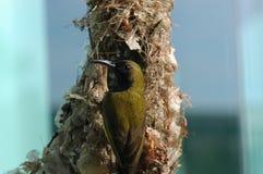 Birds and bird nests Stock Photos