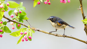 Birds. A bird in search of food stock image