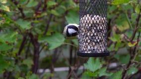 Birds on a birdfeeder stock video