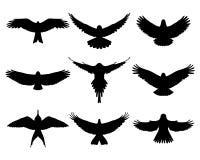 Birds. Black silhouettes of birds in flight Royalty Free Stock Image