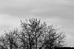 Birds at black and white sunset Royalty Free Stock Photo