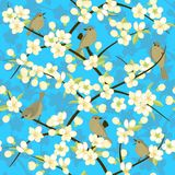 Birds and blooming branches of the cherry. Blossoms on sky background, vector seamless pattern Royalty Free Stock Image