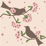 Birds in blossom. Two birds in cherry blossom - springtime illustration royalty free illustration