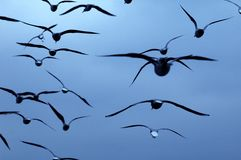 Birds in blue Stock Images