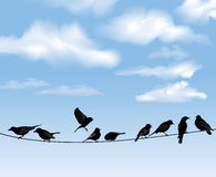 Birds in blue sky Royalty Free Stock Photo