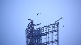 Birds in the blue sky stock video footage