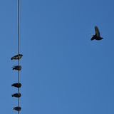 Birds blue sky Royalty Free Stock Photography