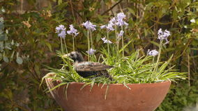 Birds in the bluebells stock video