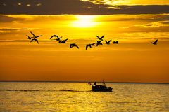 Birds and a boat in sunset. With calm sea Royalty Free Stock Photos