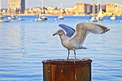 Birds of Boston stock photos