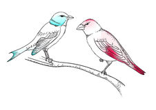 Birds on the branch. Pen And Ink-style illustration of pair of birds sitting on the branch Stock Photography