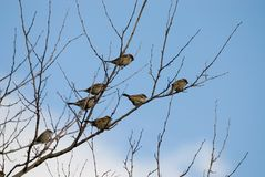 Birds on a branch. On a clear sunny day Stock Photography