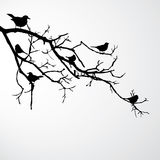 Birds on branch Royalty Free Stock Photography