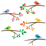 Birds on branch Stock Image