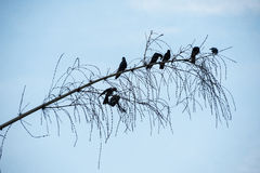 Birds on the branch Royalty Free Stock Photos