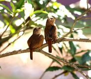 Birds on the branch Stock Image