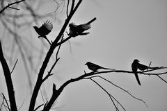 Birds on a branch Royalty Free Stock Images
