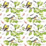Birds on branch, feathers. Seamless repeating pattern. Watercolor Stock Image