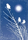 Birds on branch at night with moon Stock Photos