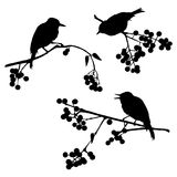 Birds on the branch - set of vector elements. Birds on the branch during summer days - vector illustration stock illustration