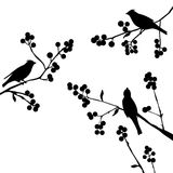 Birds on the branch - set of vector elements. Birds on the branch during summer days - vector illustration Stock Photo