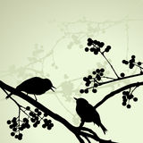 Birds on the branch during the summer day. 2d vector stock illustration