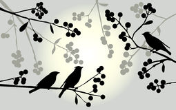 Birds on the branch during summer days - vector illustration Stock Photo