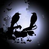 Birds on the branch. Summer night. 2d vector Royalty Free Illustration