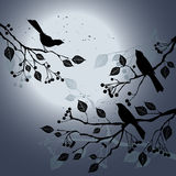 Birds on the branch during summer's night. 2d vector Stock Photo